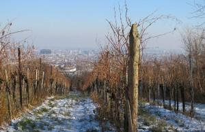 Blick von den Weinbergen runter nach Wien