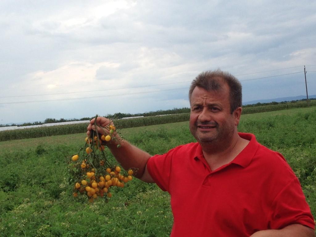 Stekovics mit seinen Gelbköpfchen